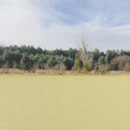 Thumbnail: Evergreen Treeline Backdrop 001