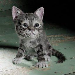 Thumbnail: kitten
