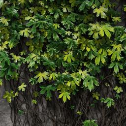 Thumbnail: Ivy particle preset - gree-yelow mix