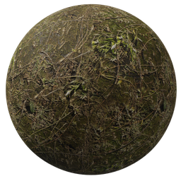 Thumbnail: Moss ground