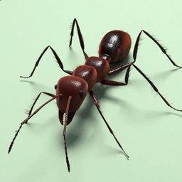 Thumbnail: Ant