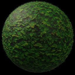 Thumbnail: Leaves green