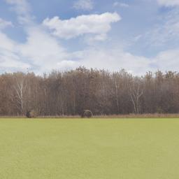 Thumbnail: Treeline of Autumn Backdrop 003