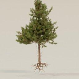 Thumbnail: Pine tall