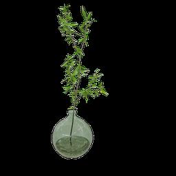 Thumbnail: Glass jug vegetation