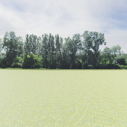 Thumbnail: Greenleaf Treeline Backdrop 004