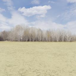 Thumbnail: Treeline of Autumn Backdrop 004