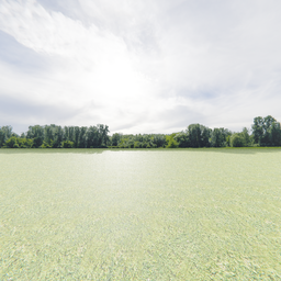 Thumbnail: Greenleaf Treeline Backdrop 007